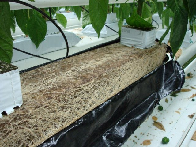 Speedgrow Green Slab in Use