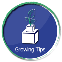 GrowingTips1